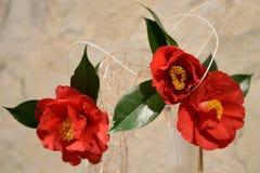 Camelia, bloemen, tentoonstelling Stock Foto's