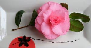 Camelia rosa in un piatto di porcellana delicato immagini stock libere da diritti