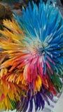 Camelias Colourful fotografia stock libera da diritti
