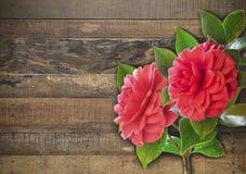 camellia Imagens de Stock
