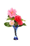 Camellia arrangement Royalty Free Stock Photos