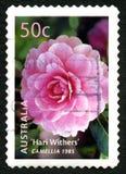 Camellia Australian Postage Stamp Stockbilder
