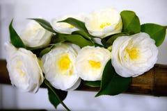 Camellia blommor, utställning royaltyfri bild