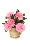 Camellia flower arrangement Stock Photo