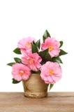 Camellia flower arrangement Stock Photos