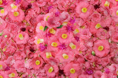 Camellia flower background Stock Images
