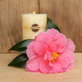 Camellia and candle Royalty Free Stock Photo