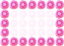 Camellia flower frame Stock Image