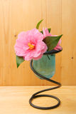 Camellia flower in vase on wood Stock Photography
