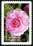 Camellia Flowering Plant Australian Postage Stamps Stock Images