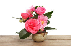 Camellia flowers Stock Photography