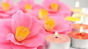 Camellia flowers and candles Royalty Free Stock Image