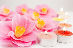 Camellia flowers and candles Royalty Free Stock Photos