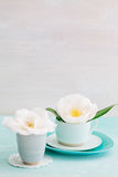 Camellia flowers. Camellia flower blossoms in turquoise cups Stock Image
