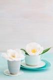 Camellia flowers Stock Image