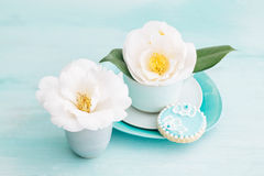 Camellia flowers. Camellia flower blossoms in turquoise cups with a sugar cookie stock image