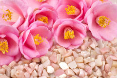 Camellia flowers and gemstone Royalty Free Stock Image