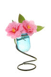 Camellia flowers in a vase Royalty Free Stock Photography