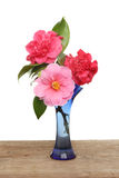 Camellia flowers in a vase Stock Photos