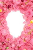 Camellia frame Stock Images