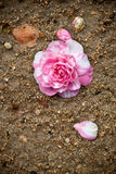 Camellia and ground Stock Photography