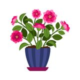 Camellia house plant in flower pot. Vector icon on white background Royalty Free Stock Images