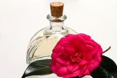 Camellia oil. Glass bottle with moisturizing camellia oil and camellia flower Stock Images