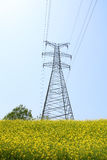 Camellia oil and highvoltage tower Stock Image