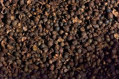 Camellia Oil seed. Stock Image