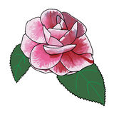 Camellia rose hand drawn with aquarelle colors.  Royalty Free Stock Photos
