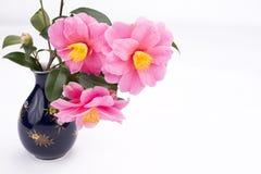 Camellia sasanqua flowers Stock Image