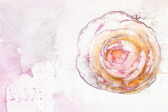 Camellia watercolor card Stock Images