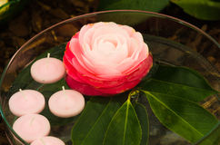 Camellias and candles Royalty Free Stock Photo