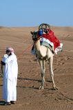 Camello Foto de archivo