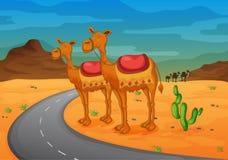 Camello ilustración del vector