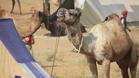 Camello metrajes