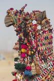 Camello adornado Imágenes de archivo libres de regalías