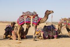 Camello adornado en el festival del desierto en Jaisalmer, Rajasthán, la India Fotografía de archivo libre de regalías