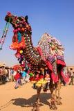 Camello adornado en el festival del desierto, Jaisalmer, la India Imágenes de archivo libres de regalías