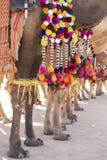 Camello adornado en el festival del desierto en Jaisalmer, Rajasthán, la India Pies del ` s del camello Imagenes de archivo