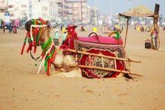 Camello adornado en la playa del mar fotos de archivo libres de regalías