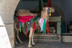 Camello colorido en Kairouan Fotos de archivo libres de regalías