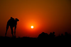Camello con los miembros de una tribu en la puesta del sol imagen de archivo libre de regalías