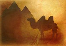 Camello de Egipto y fondo de las pirámides stock de ilustración
