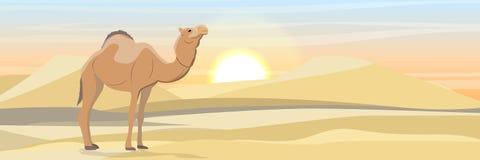 Camello de One-humped en el desierto con las dunas de arena fauna de África libre illustration