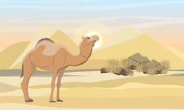 Camello de One-humped en el desierto con las dunas, las piedras y la hierba seca ilustración del vector
