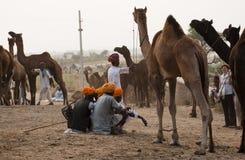 Camello de Pushkar justo Foto de archivo