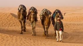 Camello del dromedario Fotografía de archivo