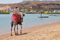 Camello del montar a caballo del hombre a lo largo de la playa Imagenes de archivo