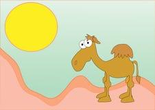 Camello divertido en el desierto Imagen de archivo